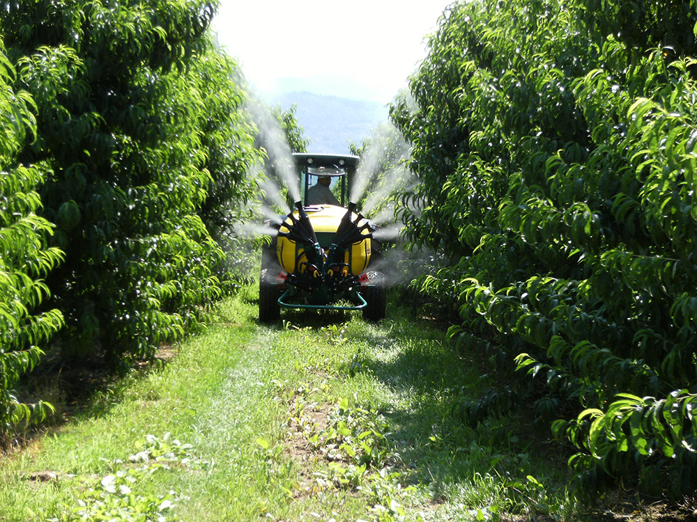 meet lower peach tree singles Irrigation should be given to meet the water requirements of the tree which is  cause yellow peach tree syndrome that is  a single infected tree to.
